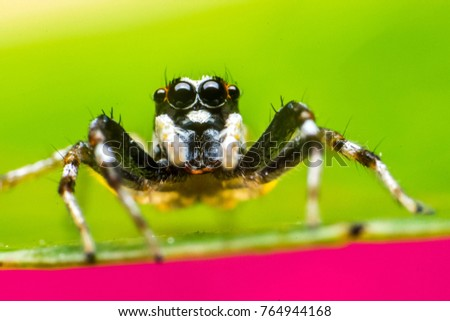 Jumping spider macro photography with blurry background #764944168
