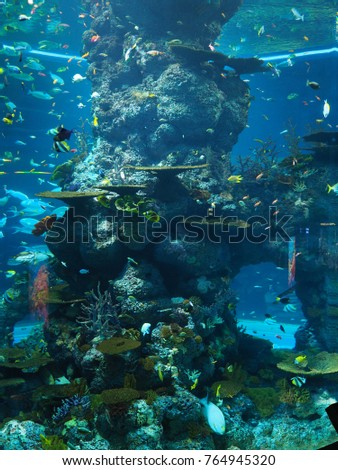 Sentosa, Singapore - November 11, 2017 : The coral reefs and various fishes in an aquarium ecosystem #764945320