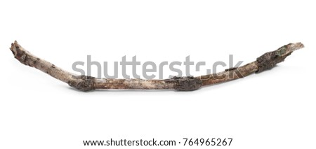 Dry birch branch isolated on white background #764965267