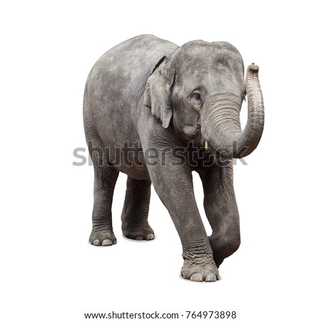 Baby elephant on white background Royalty-Free Stock Photo #764973898
