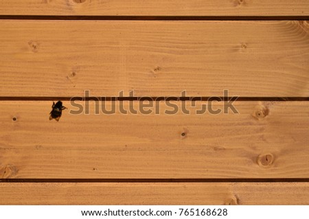 The texture of weathered wooden wall. Aged wooden plank fence of horizontal flat boards  with small bee sitting on them #765168628
