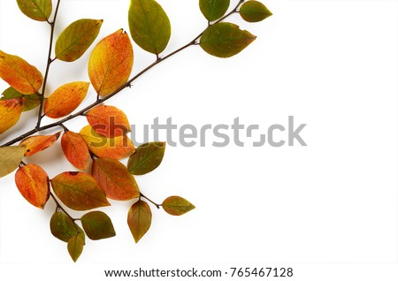 Creative Autumn composition. Tree branch and yellow leaves on a white background. #765467128