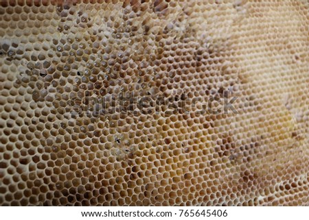 old honey combs with the remains of honey without bees #765645406