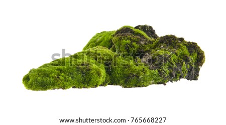 moss isolated on white background Royalty-Free Stock Photo #765668227
