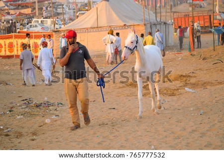 Pushkar, India - November 01, 2017: A man taking his horse to the market. #765777532
