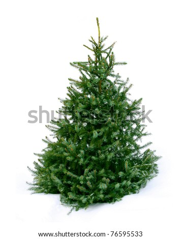 Young green Christmas tree spruce on white snow background #76595533