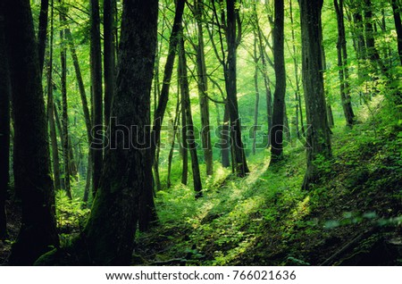green summer forest #766021636