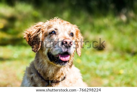 Portrait of happy golden retriever with blurred background #766298224