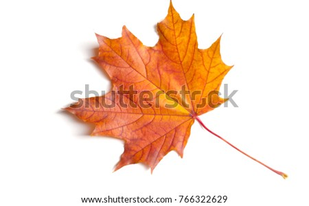 Studio photo, Leaves of autumn. Maple leaves. yellow red green. This photo will decorate your design. You will be the first again. Happy Golden Autumn! #766322629