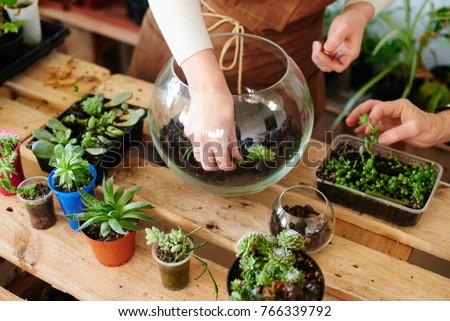 Women's hobby. Girl nerd florist make a mini terrarium with house plants Royalty-Free Stock Photo #766339792