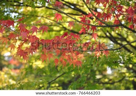 autumn in japan #766466203