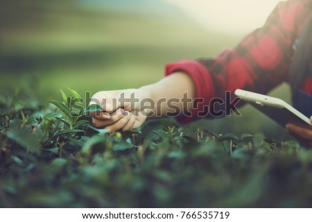 Farmer Tea Plantation checking quality by tablet agriculture modern technology Concept.