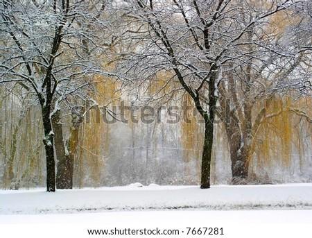 Beautiful Winter Landscape #7667281