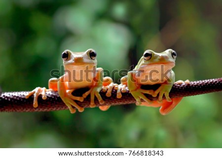 Two dumpy frog on the branch #766818343