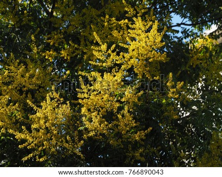 The beautiful yellow flowers blooming on the trees in summer #766890043