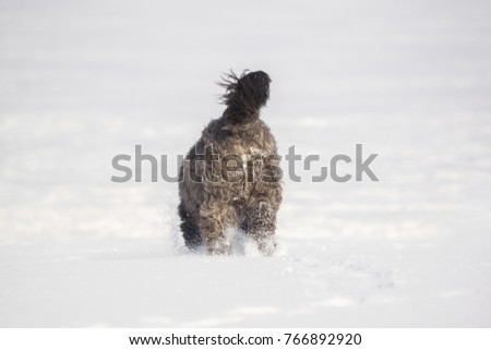 Big dog with long hair in the snow #766892920