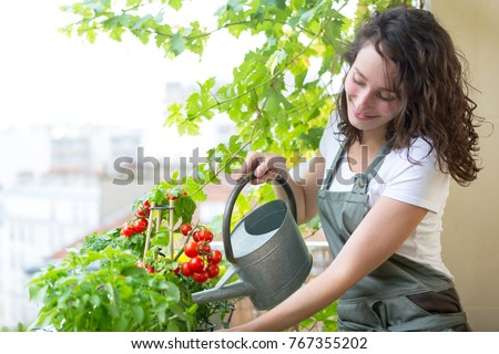 View of a Young woman watering tomatoes on her city balcony garden - Nature and ecology theme #767355202