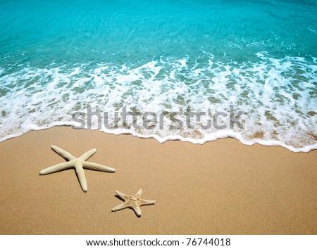 starfish on a beach sand #76744018