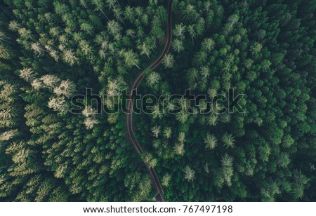 Aerial view of a road in the middle of the forest Royalty-Free Stock Photo #767497198