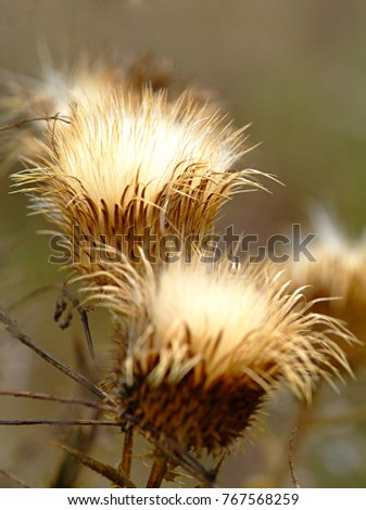 Dry flower isolated on natural background #767568259