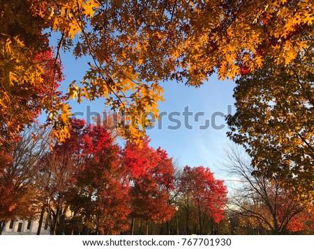 Autumn park in Washington #767701930