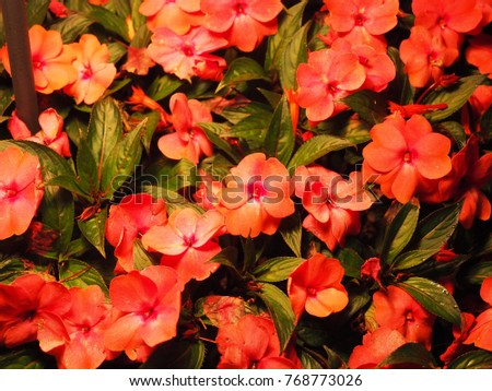 Flowers and leaves #768773026