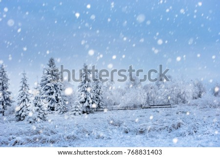 Fairy winter landscape with fir trees and snowfall. Christmas background with snowy fir trees and snowflakes #768831403