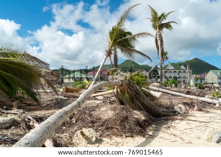 Hurricane Irma aftermath destruction to some of st.maarten/stmartin beaches blowing down trees and uprooting some on the beach.  #769015465