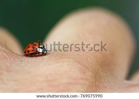 ladybug on hand #769075990