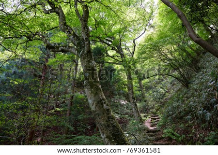 Forest of Katsuragiyama, Japan #769361581