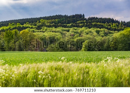 Beautiful windy spring day with green trees and grass on a hill and a field #769711210