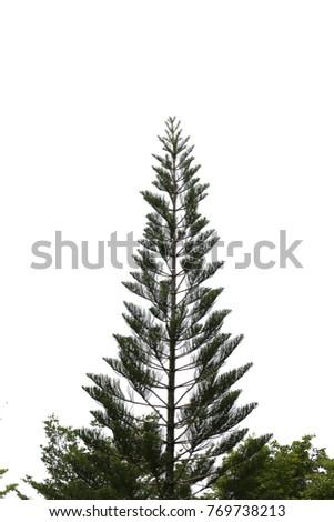 Isolated Christmas tree on white background #769738213
