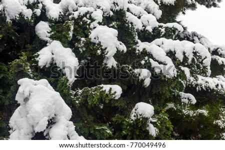 Winter patterns on trees, snow covered tree #770049496