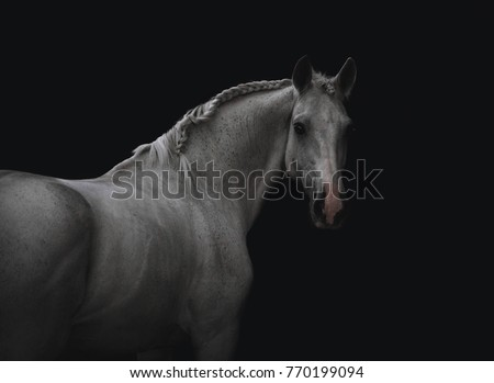 portrait of a white horse from behind on a black background #770199094