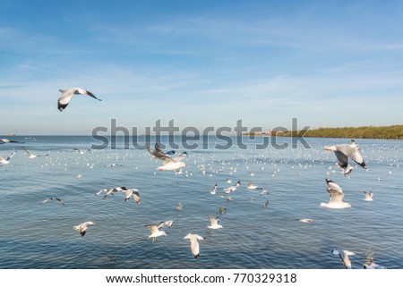 Seagulls are flying in the sea. #770329318