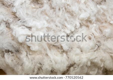 Background of white merino wool #770520562