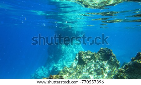 Underwater photo of coral reef in Caribbean exotic turquoise waters #770557396