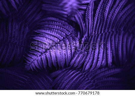 Beautiful fern leaves green foliage natural floral fern background. Ultra Violet creative and moody color of the picture.