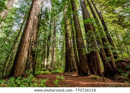 Giant Redwood trees in Tall Trees Grove, Redwood National Park, California Royalty-Free Stock Photo #770726518