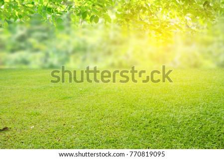 nature spring grass background texture.