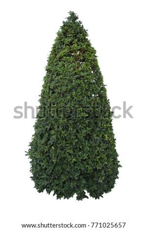 tree isolated on white background #771025657