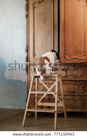 the dog looks in the closet. funny jack russell terrier #771150463