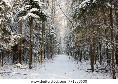 Winter snow forest  #771353530