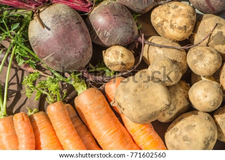 A Closeup view of freshly picked Vegetables #771602560