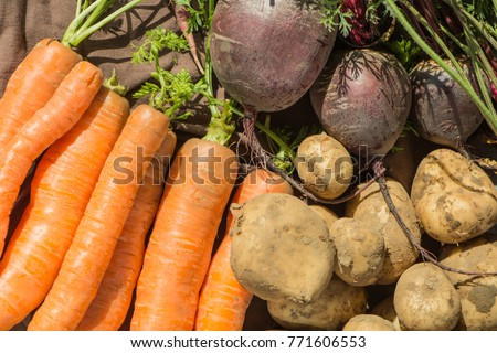 A Closeup view of freshly picked vegetables. #771606553