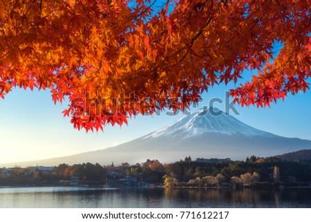 Fuji mountain and maple tree in autumn at Kawaguchiko lake. #771612217