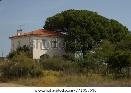 House tree summer #771815638