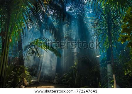 Morning light in beautiful jungle garden Royalty-Free Stock Photo #772247641