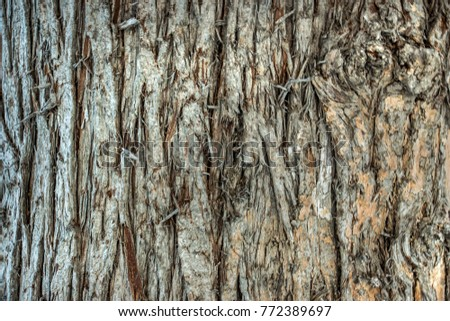 Seamless tree bark background. Brown tileable texture of the old tree. #772389697