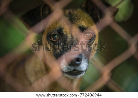 Dog Puppies in the cage #772406944
